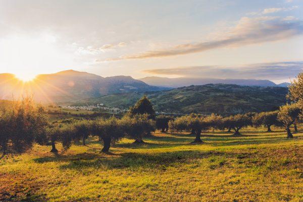 Bezpośredni importer prawdziwej oliwy z oliwek extra virgin z Grecji i Hiszpanii | Kolebka Smaku